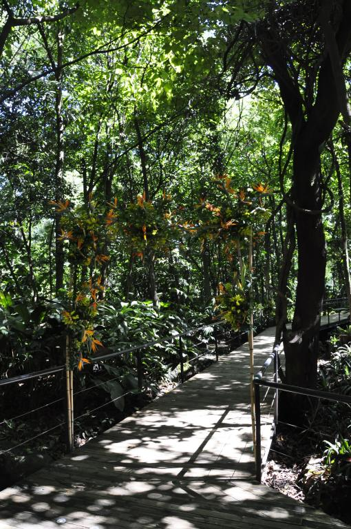 Bosque tropical (4)