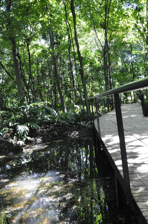 Bosque tropical (1)